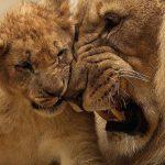 leone-zoosafari-01